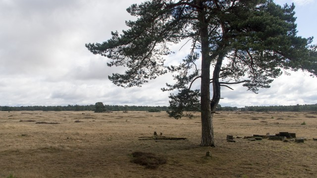 hoenderloo - otterlo (23)