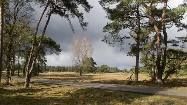 hoenderloo - otterlo (24)